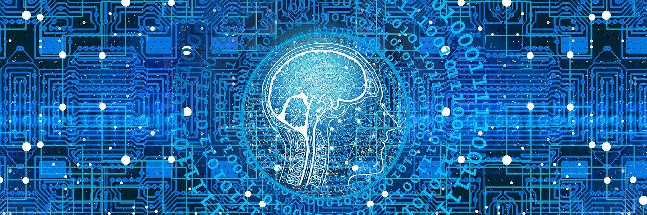 spermidine en hersenen